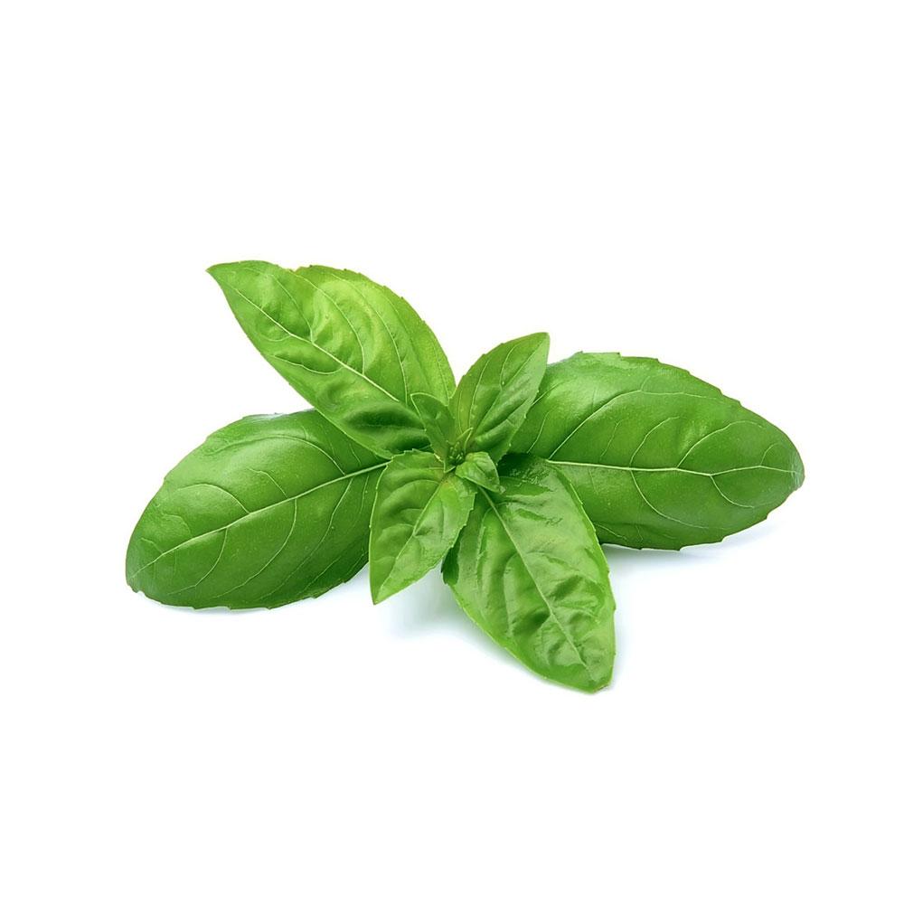 Sweet Basil / Ocimum Basilicum