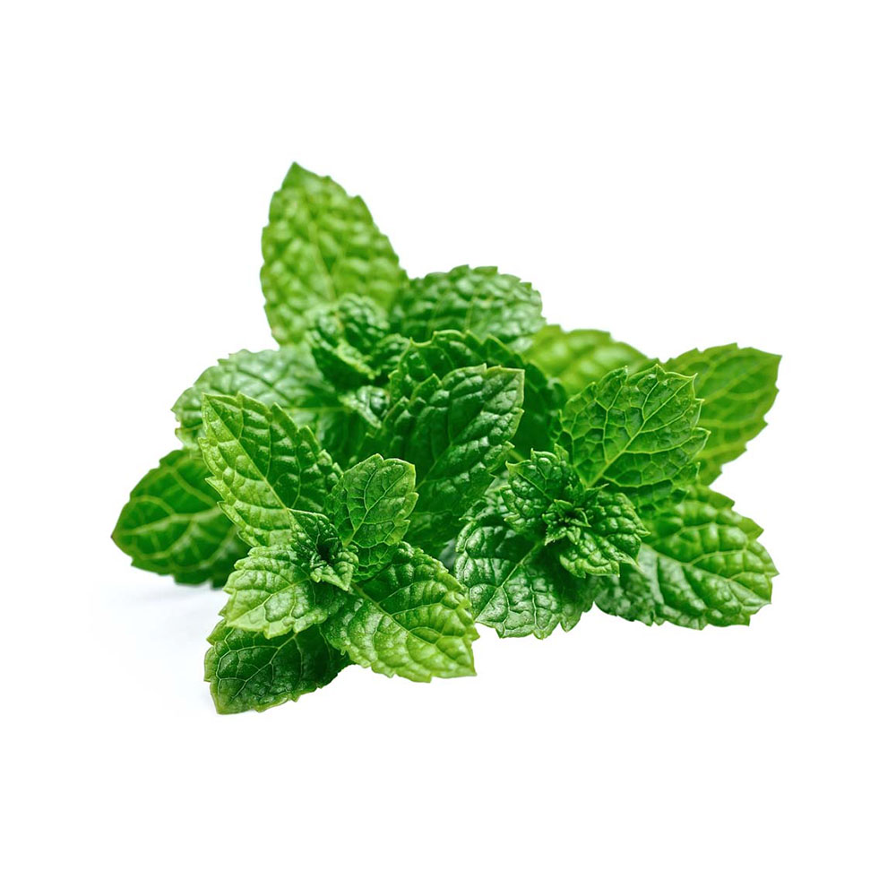 Peppermint / Mentha Piperita