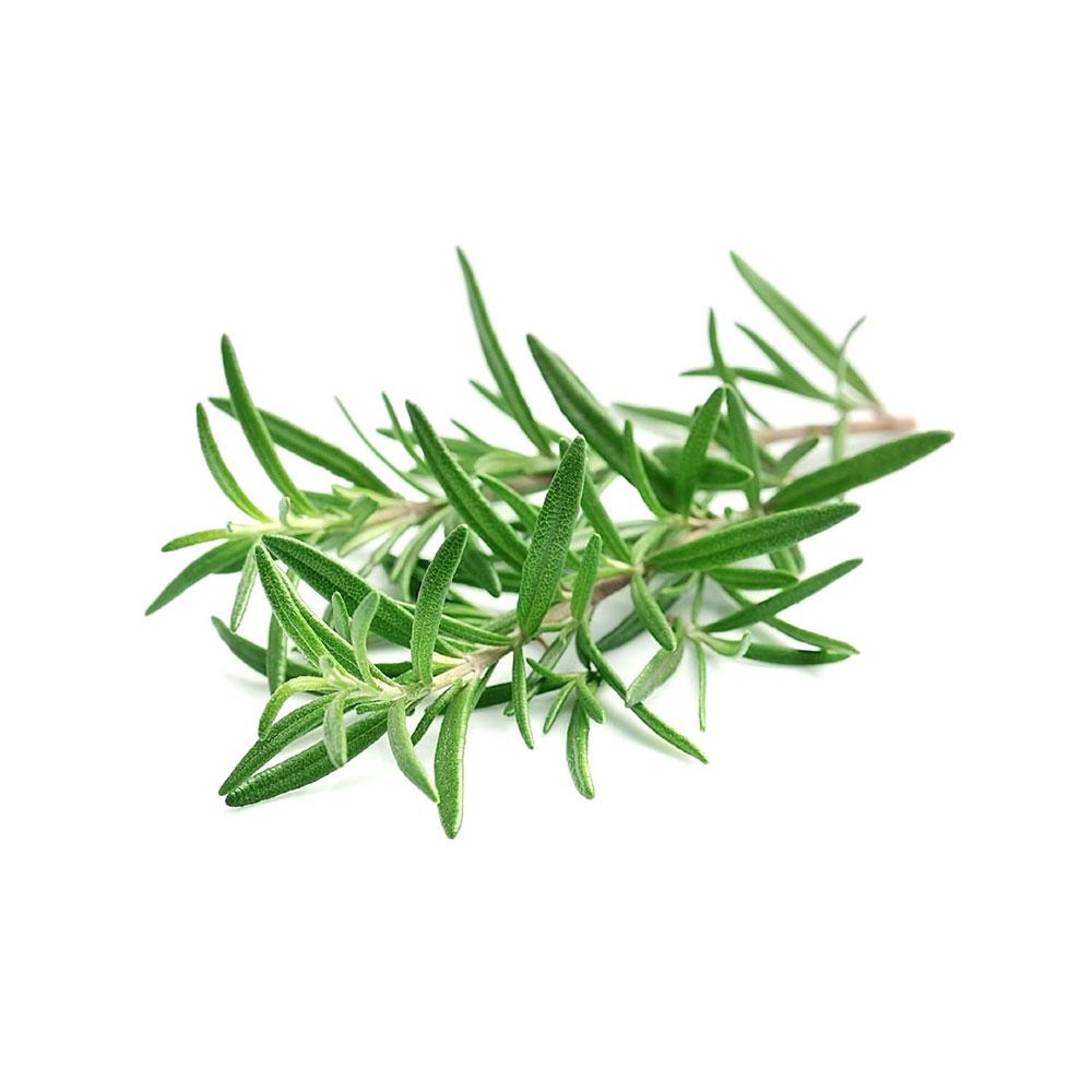 Rosemary / Rosmarinus Officinalis